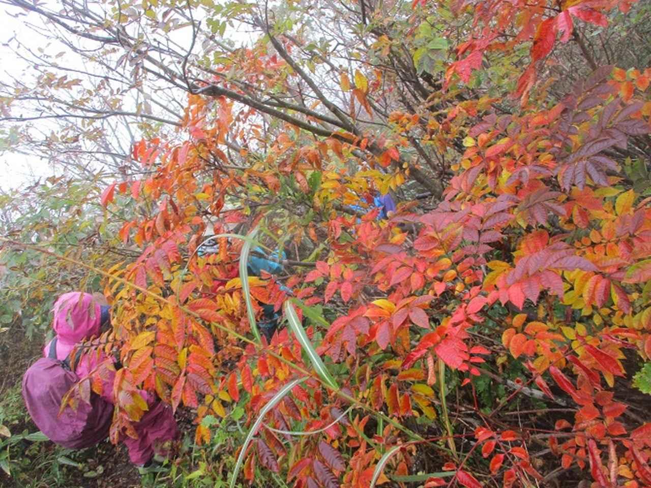 画像14: 10月18日に岡田ガイドのコースで三国山へ行って来ました♪