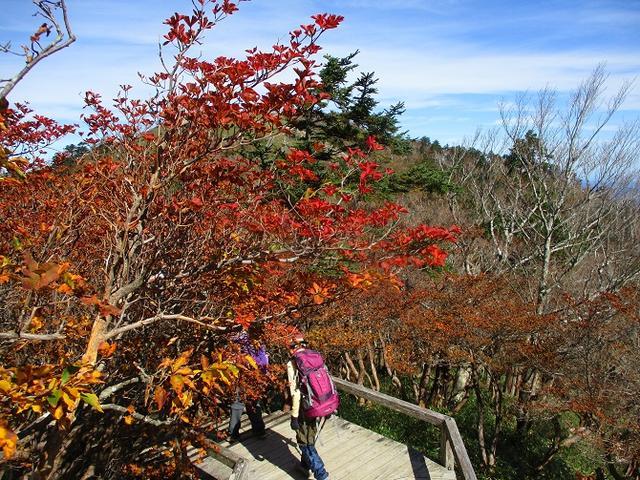 画像12: 先日10月23日より山旅会 大台ヶ原ツアー に行ってきました!