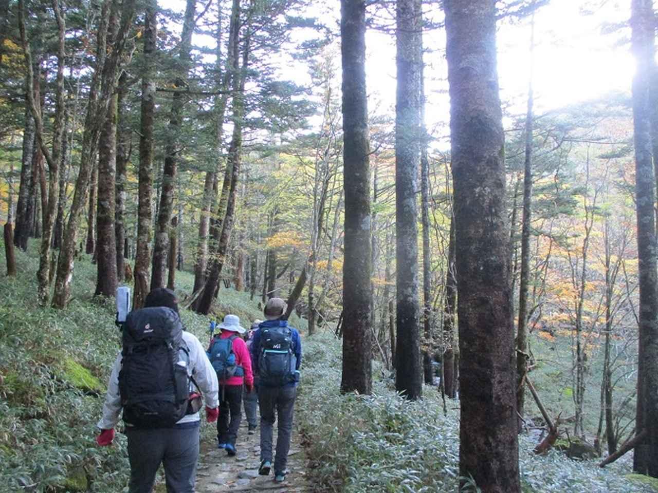 画像1: 先日10月23日より山旅会 大台ヶ原ツアー に行ってきました!