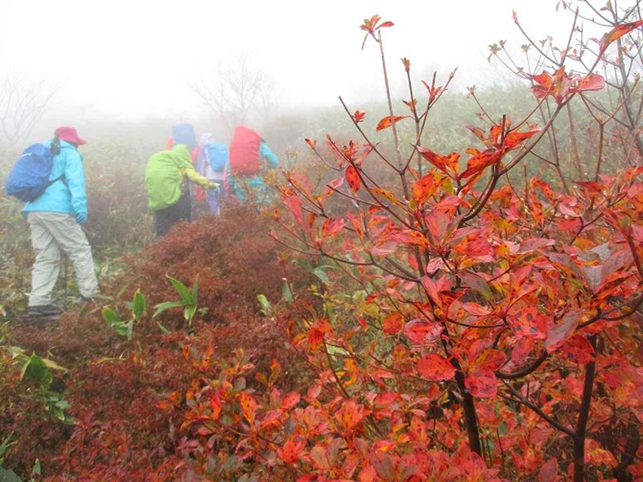 画像8: 10月18日に岡田ガイドのコースで三国山へ行って来ました♪
