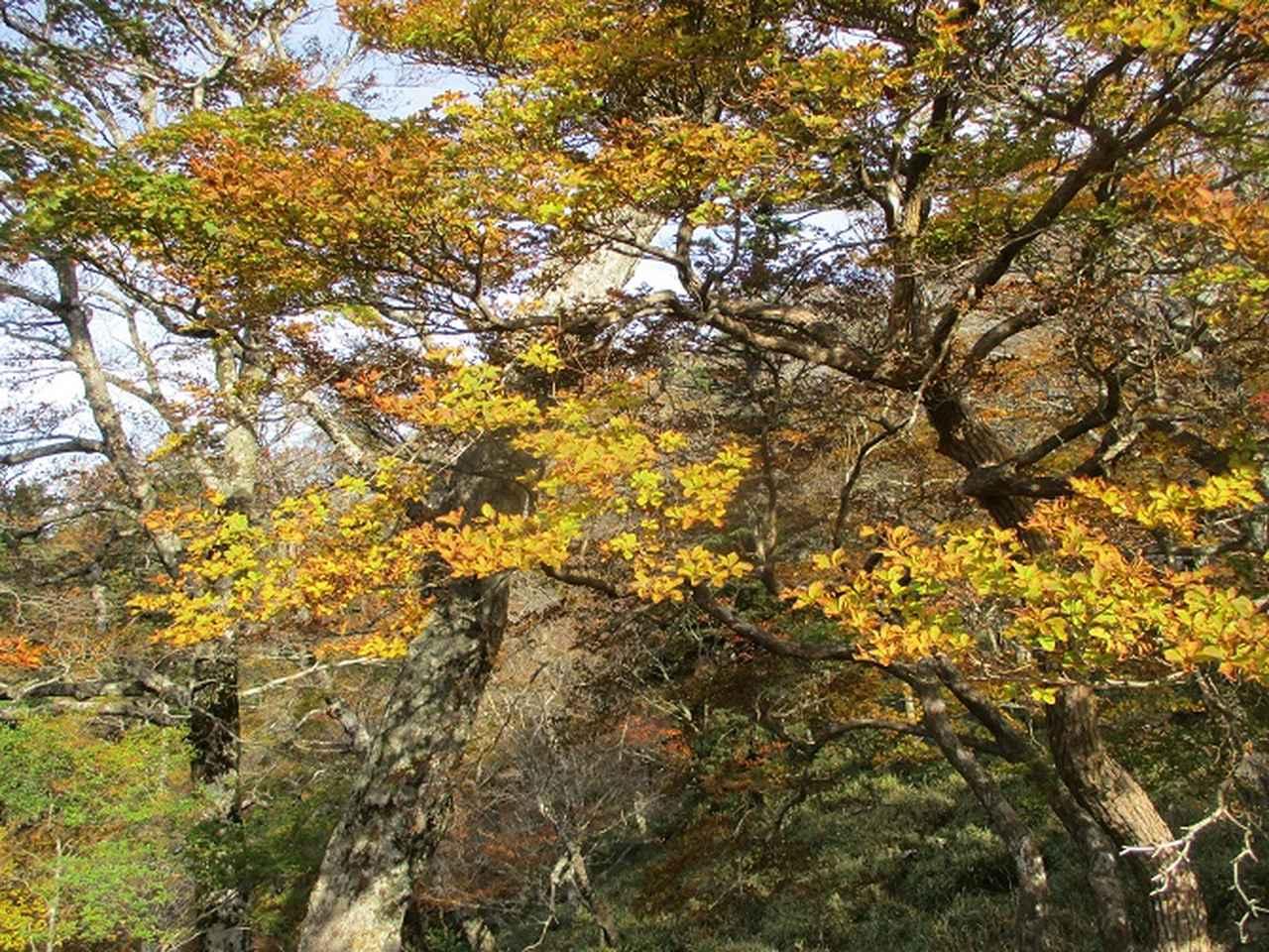 画像4: 先日10月23日より山旅会 大台ヶ原ツアー に行ってきました!