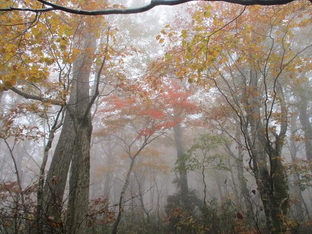 画像4: 10月24日に山旅会 「尼ヶ禿山」 ツアーに行ってきました!