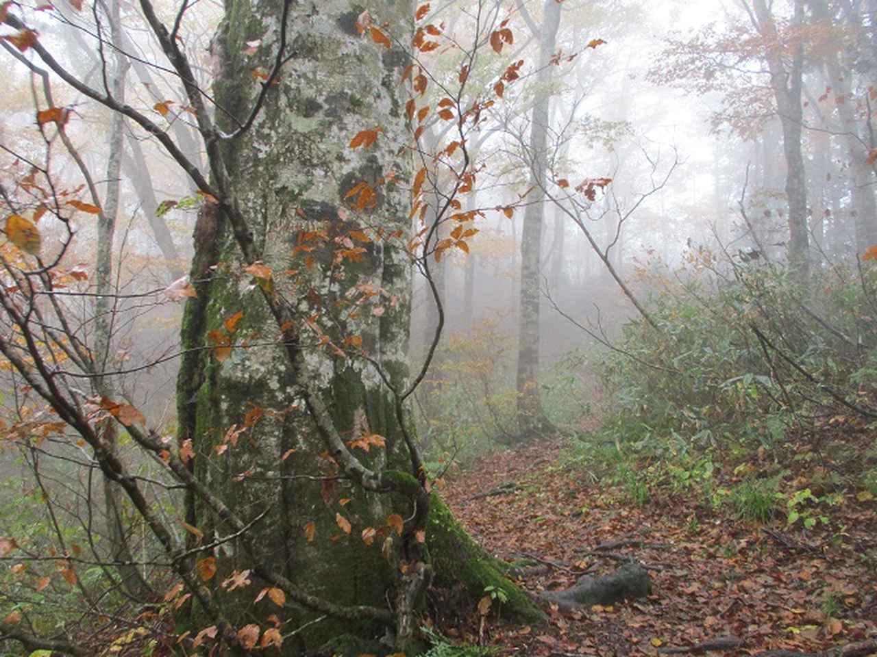 画像5: 10月24日に山旅会 「尼ヶ禿山」 ツアーに行ってきました!