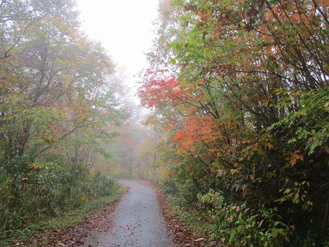 画像1: 10月24日に山旅会 「尼ヶ禿山」 ツアーに行ってきました!