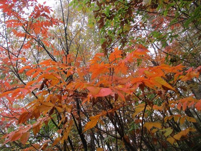 画像2: 10月24日に山旅会 「尼ヶ禿山」 ツアーに行ってきました!