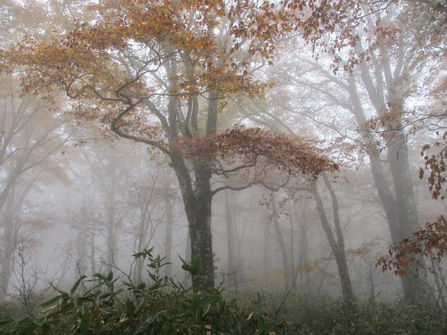 画像8: 10月24日に山旅会 「尼ヶ禿山」 ツアーに行ってきました!