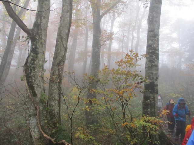 画像9: 10月24日に山旅会 「尼ヶ禿山」 ツアーに行ってきました!