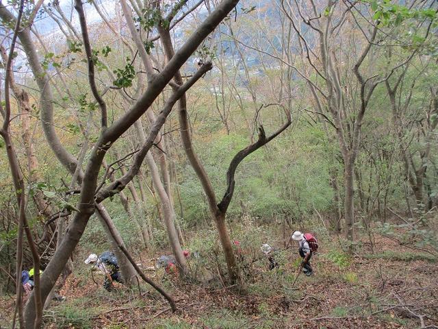 画像4: 10月26日に山旅会 「矢倉岳」 ツアーに行ってきました!