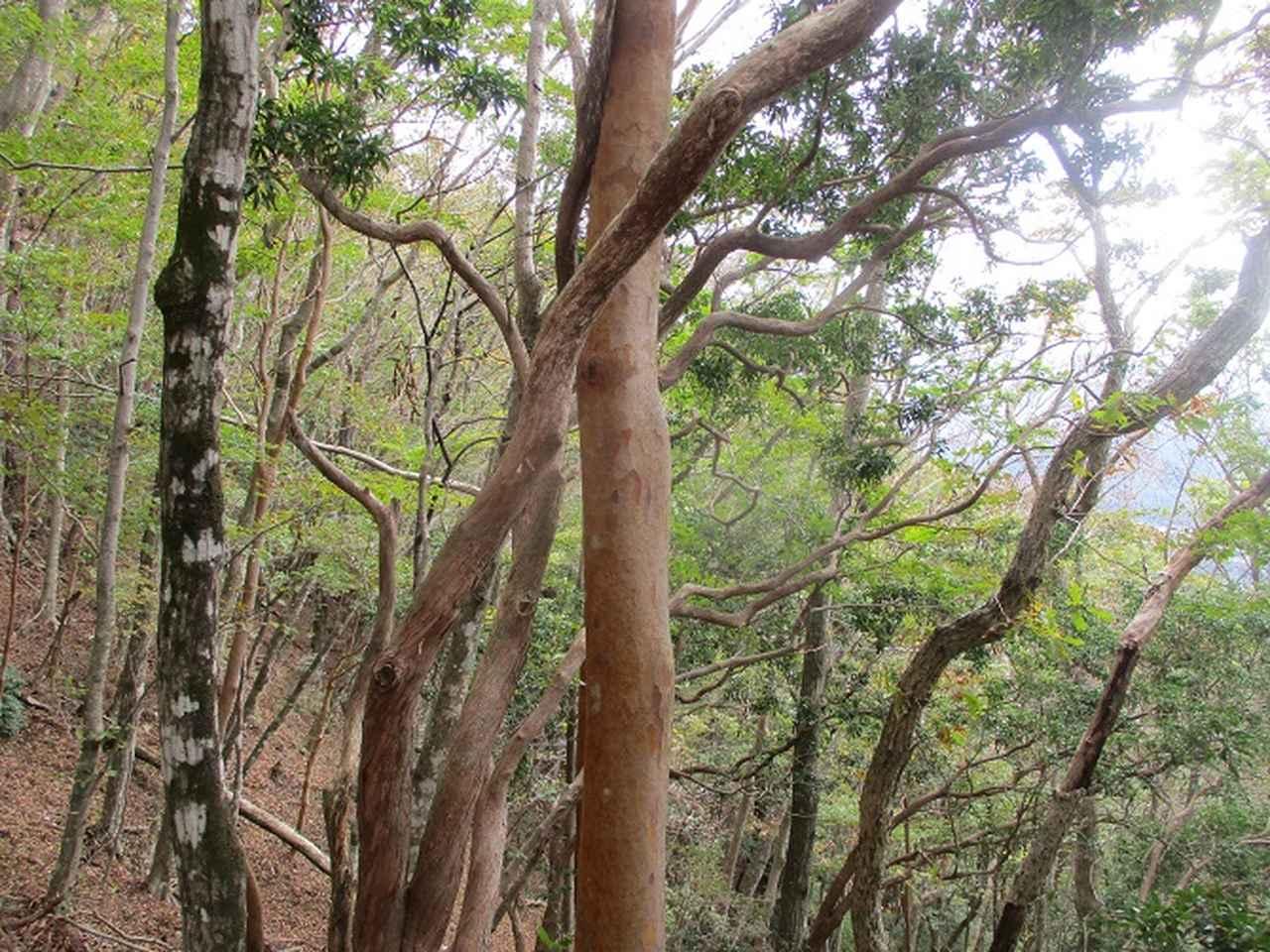 画像3: 11月の山旅会 烏帽子岳からパノラマ台 ツアーの下見に行ってきました!