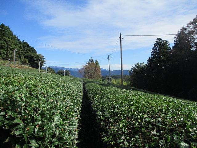 画像2: 10月26日に山旅会 「矢倉岳」 ツアーに行ってきました!