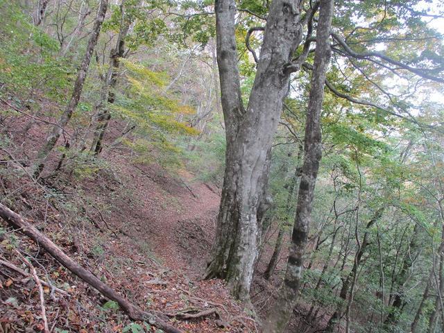 画像9: 11月の山旅会 烏帽子岳からパノラマ台 ツアーの下見に行ってきました!