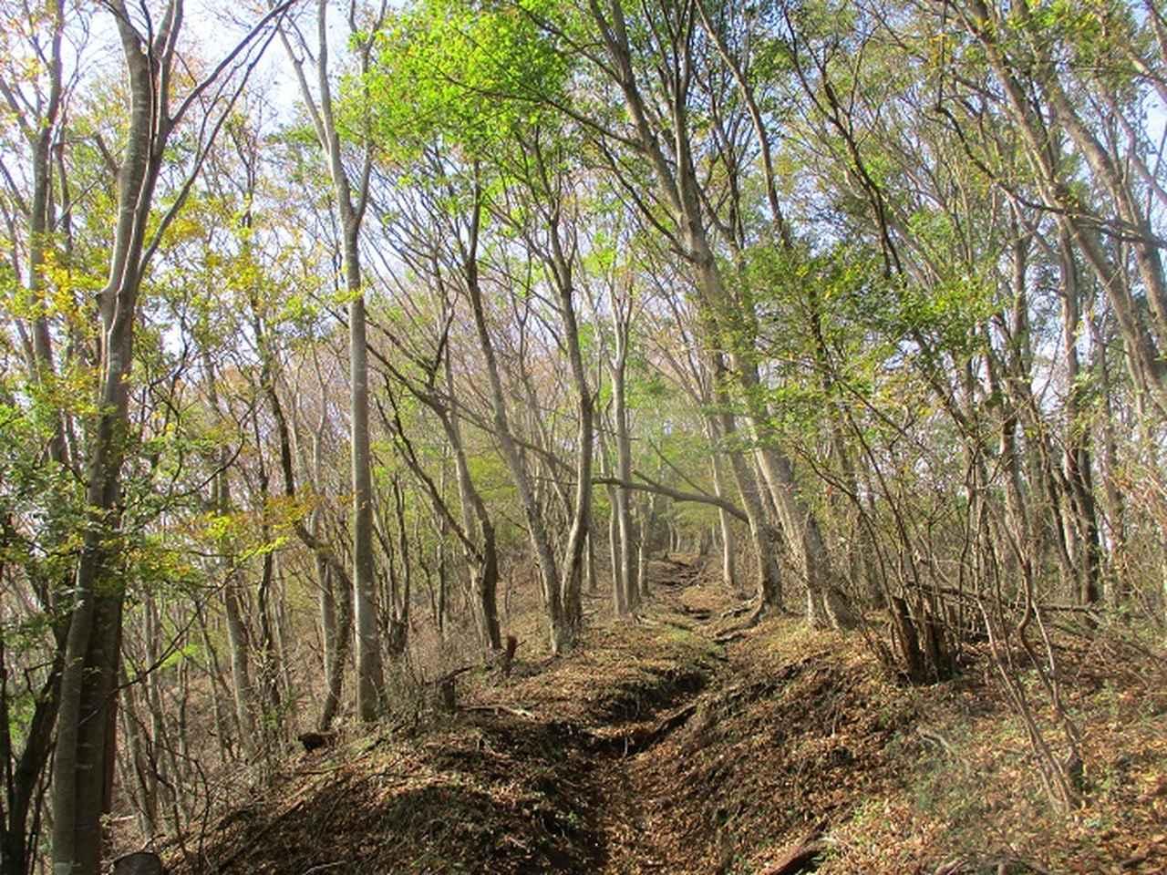 画像6: 10月26日に山旅会 「矢倉岳」 ツアーに行ってきました!