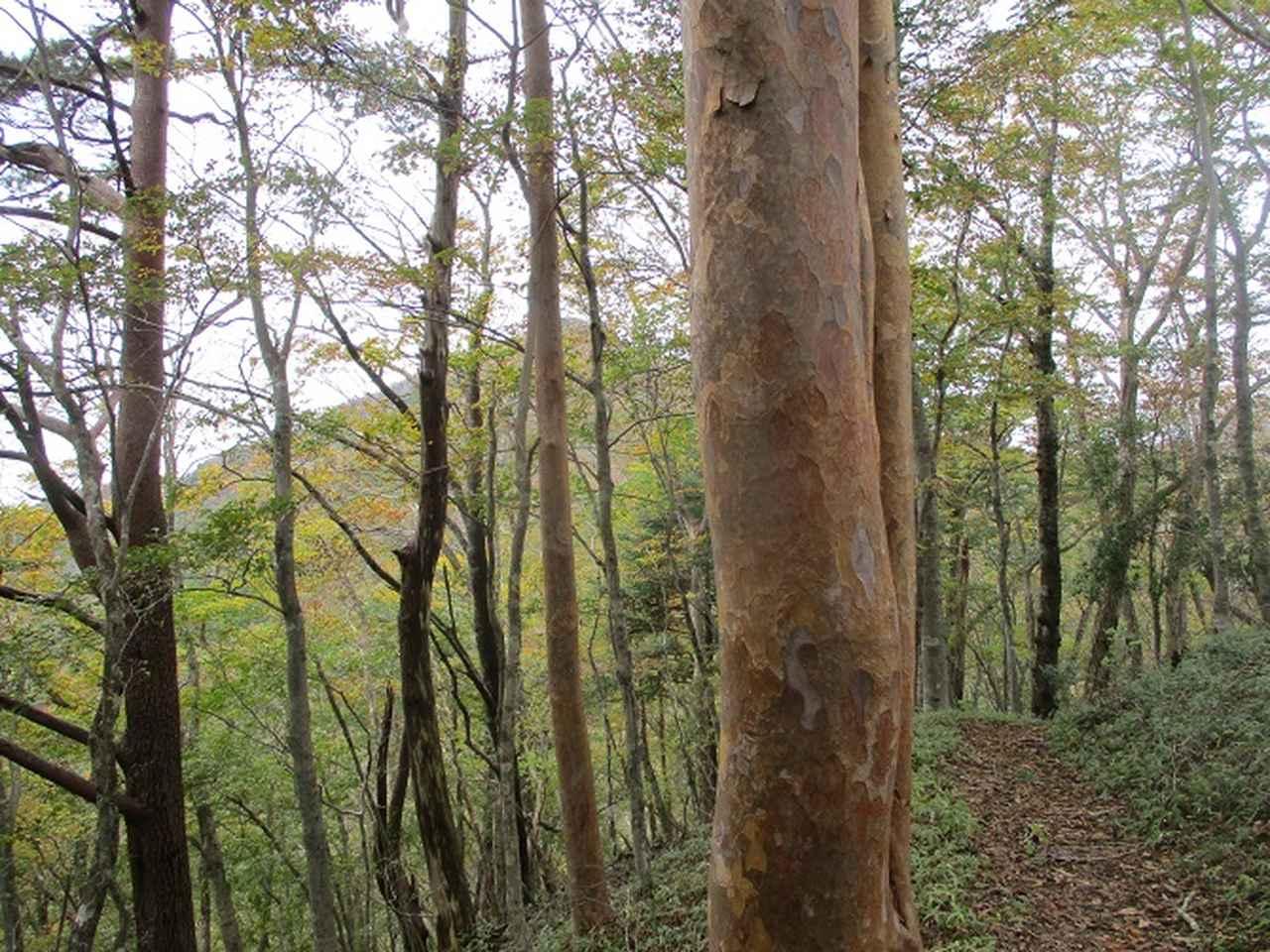 画像6: 11月の山旅会 烏帽子岳からパノラマ台 ツアーの下見に行ってきました!