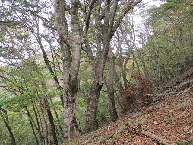 画像4: 11月の山旅会 烏帽子岳からパノラマ台 ツアーの下見に行ってきました!