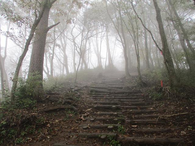 画像8: 11月の山旅会 青木ヶ原樹海と三湖台 ツアーの下見に行ってきました!