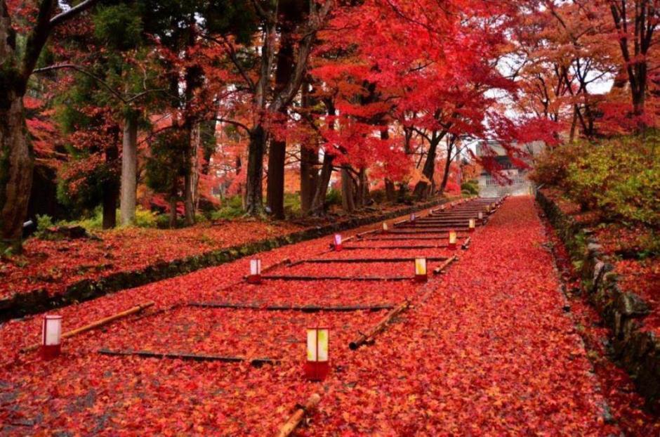 画像: <ウォーキング>『1名1室同旅行代金 名刹や世界遺産を訪ねる 紅葉の京都長期滞在ハイキング 7日間』|クラブツーリズム