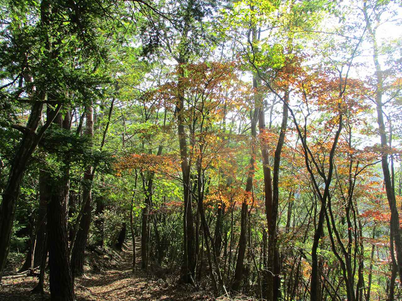 画像4: 11月の山旅会 蛾ヶ岳 の下見に行ってきました!