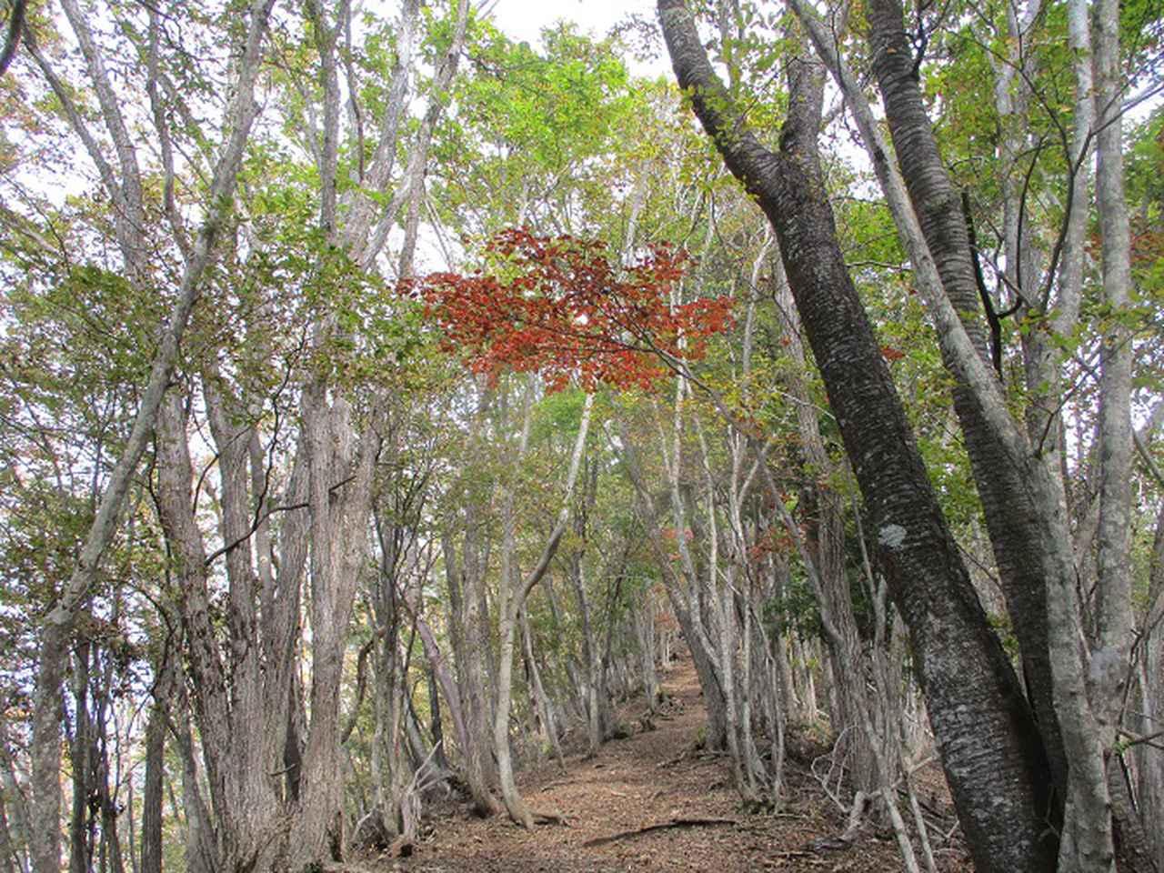 画像7: 11月の山旅会 蛾ヶ岳 の下見に行ってきました!