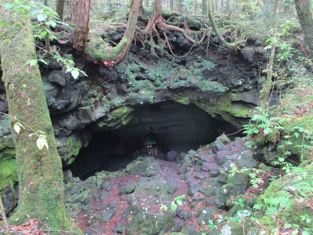 画像6: 11月の山旅会 青木ヶ原樹海と三湖台 ツアーの下見に行ってきました!