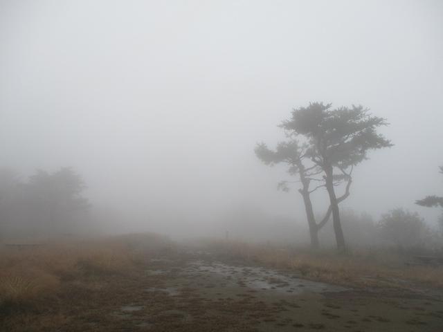 画像9: 11月の山旅会 青木ヶ原樹海と三湖台 ツアーの下見に行ってきました!