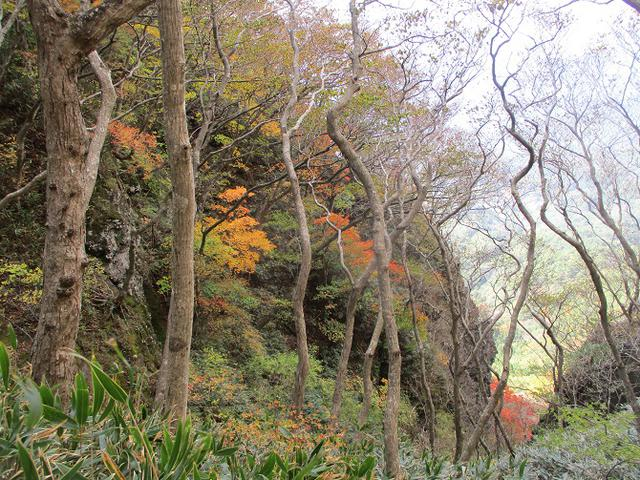 画像7: 11月1日に山旅会 「霊山」 ツアーに行ってきました!