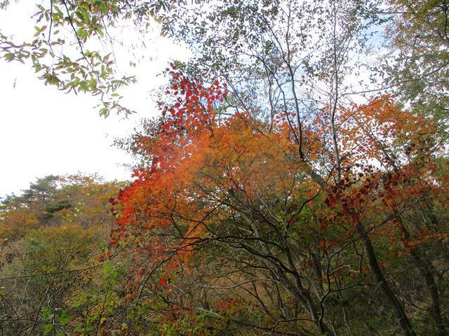 画像6: 11月1日に山旅会 「霊山」 ツアーに行ってきました!