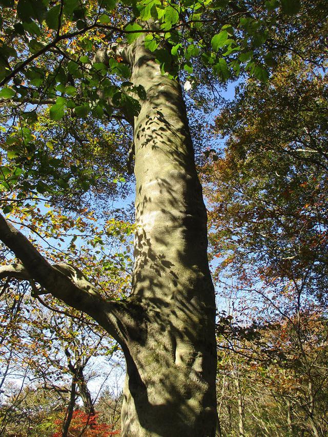 画像7: 11月の山旅会 八溝山 の下見に行ってきました!