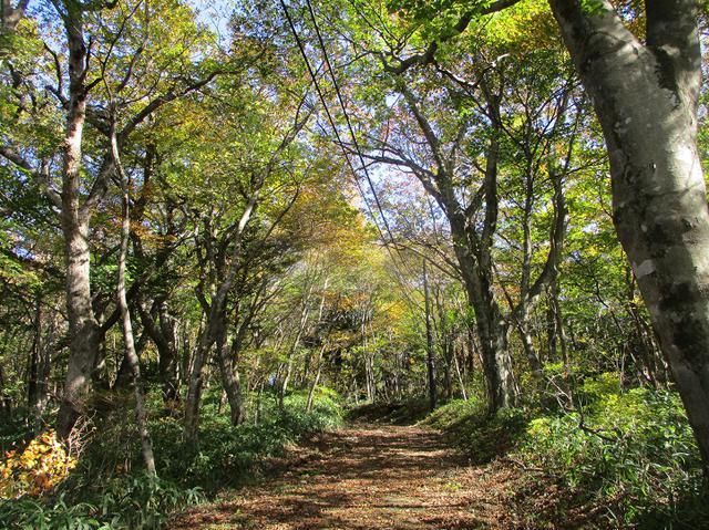 画像6: 11月の山旅会 八溝山 の下見に行ってきました!