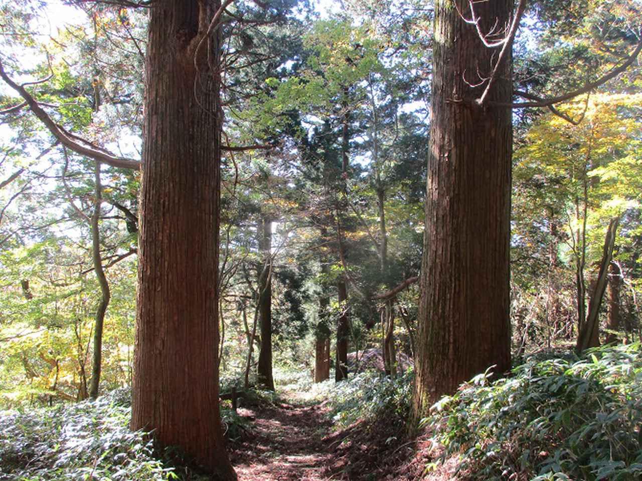画像11: 11月の山旅会 八溝山 の下見に行ってきました!
