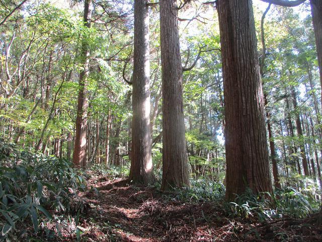 画像4: 11月の山旅会 八溝山 の下見に行ってきました!