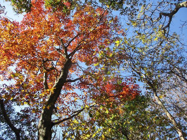 画像8: 11月の山旅会 八溝山 の下見に行ってきました!