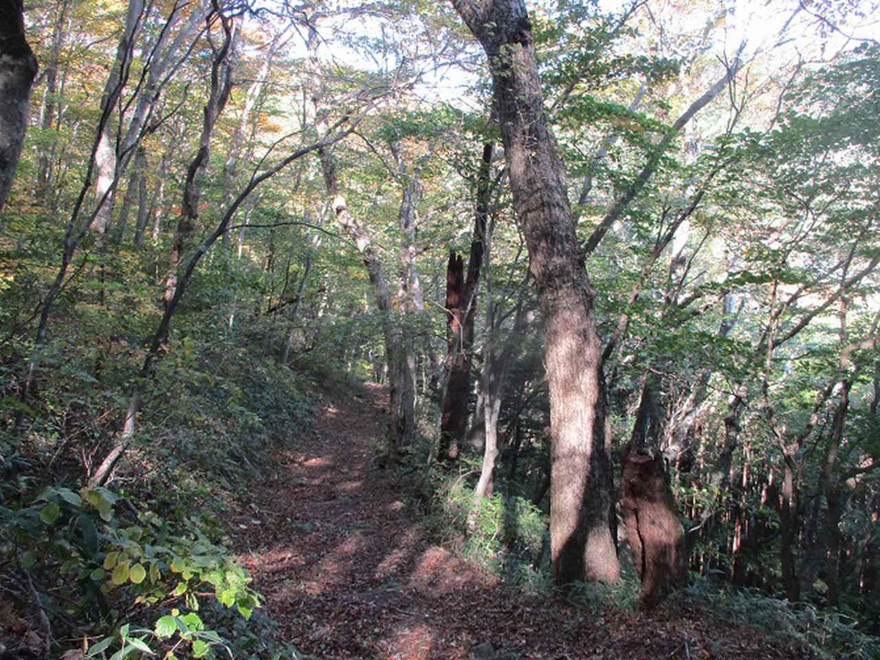 画像2: 11月の山旅会 八溝山 の下見に行ってきました!