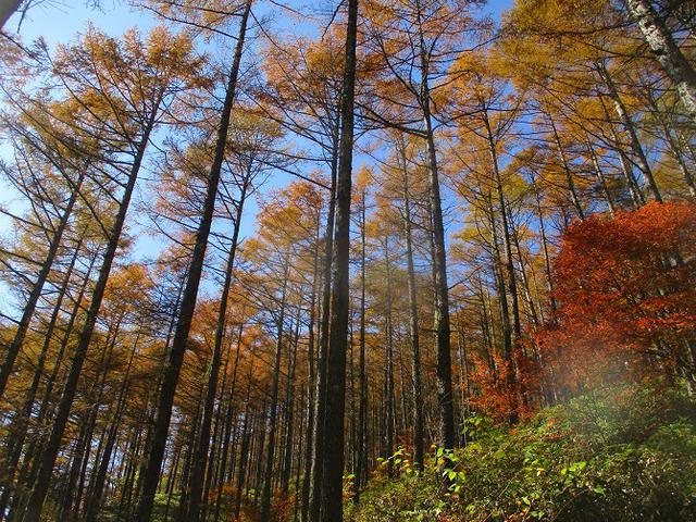 画像4: 11月6日に山旅会 「日向山」 ツアーに行ってきました!