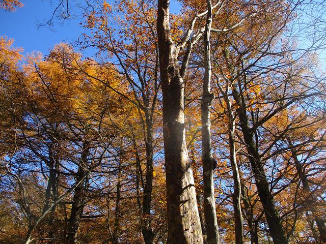 画像6: 11月6日に山旅会 「日向山」 ツアーに行ってきました!