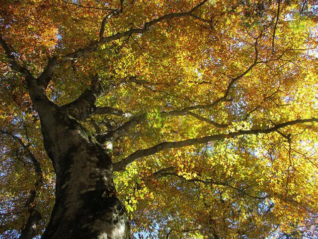 画像3: 11月6日に山旅会 「日向山」 ツアーに行ってきました!