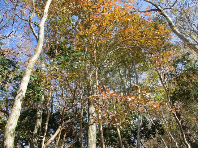 画像2: 11月7日に山旅会 烏帽子岳からパノラマ台 ツアーに行ってきました!