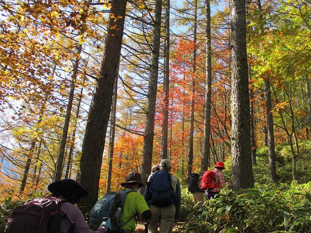 画像2: 11月6日に山旅会 「日向山」 ツアーに行ってきました!