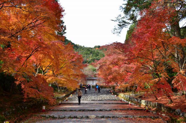画像: 奈良・京都方面の紅葉ハイキングツアー のんびり長期滞在も!|クラブツーリズム