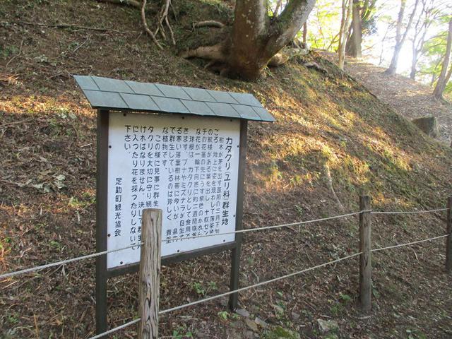 画像4: 11月の山旅会「香嵐渓と鳳来寺山」の下見に行ってきました!