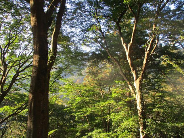 画像6: 11月の山旅会「香嵐渓と鳳来寺山」の下見に行ってきました!