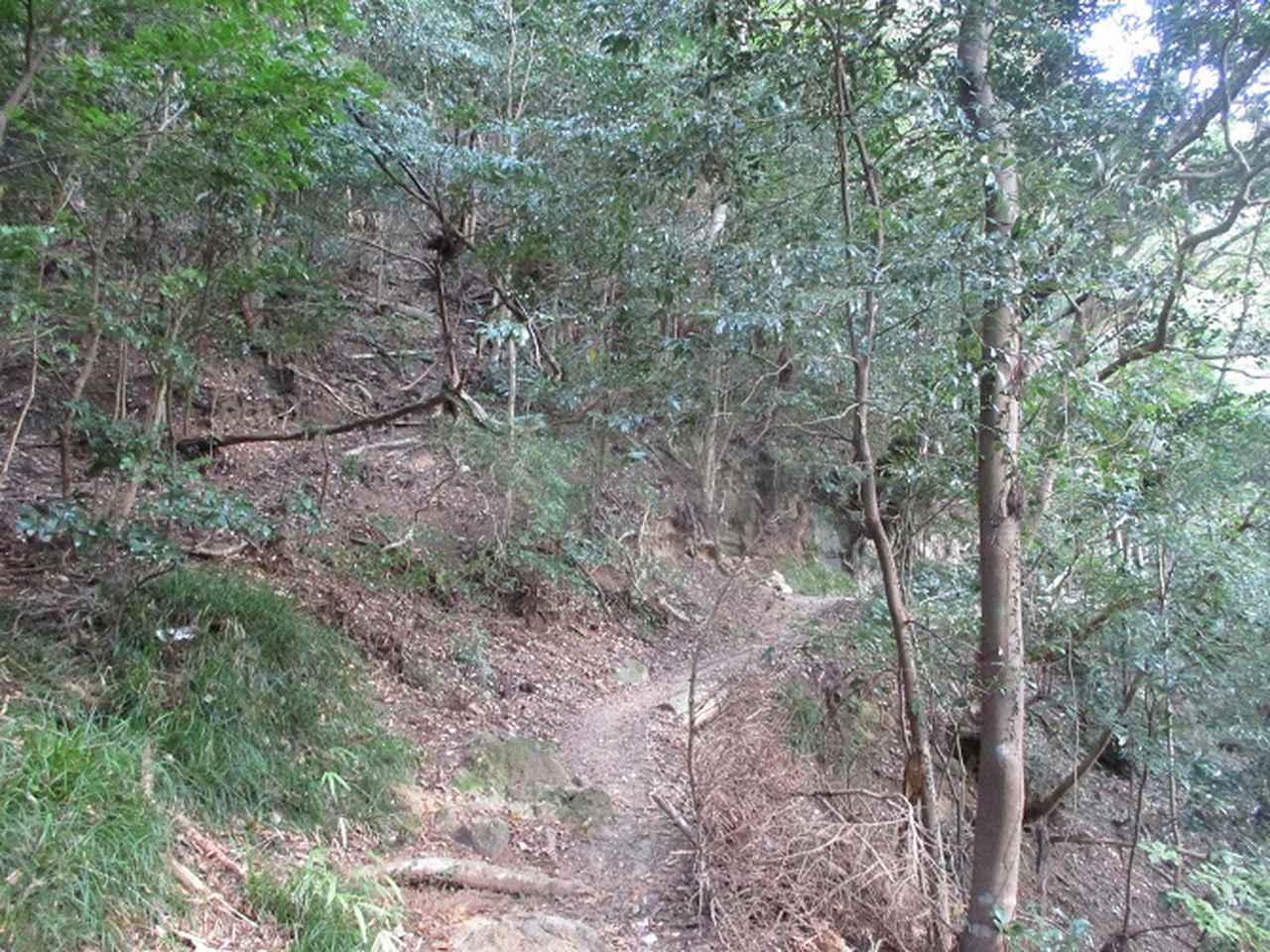 画像3: 11月の山旅会 「香嵐渓と鳳来寺山」 の下見に行ってきました!
