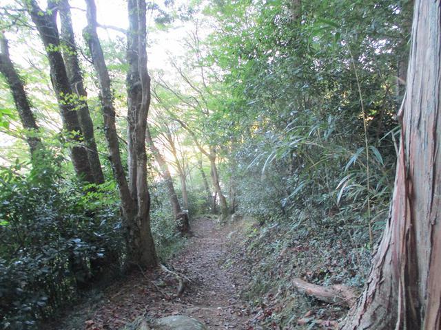 画像8: 11月の山旅会「香嵐渓と鳳来寺山」の下見に行ってきました!