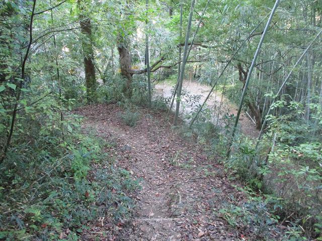 画像9: 11月の山旅会「香嵐渓と鳳来寺山」の下見に行ってきました!