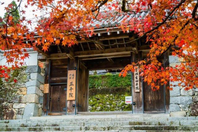 画像: <ハイク初級>『琵琶湖北の名刹と紅葉の絶景 京都市内紅葉めぐりウォーク 2日間』【東京出発】|クラブツーリズム