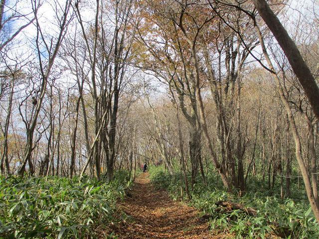 画像5: 11月14日に山旅会 八溝山 ツアーに行ってきました!
