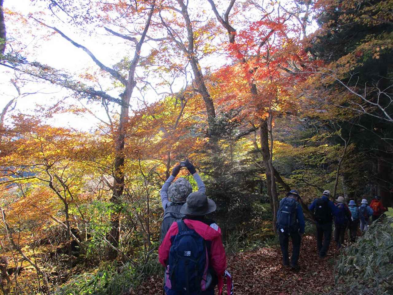 画像10: 11月14日に山旅会 八溝山 ツアーに行ってきました!