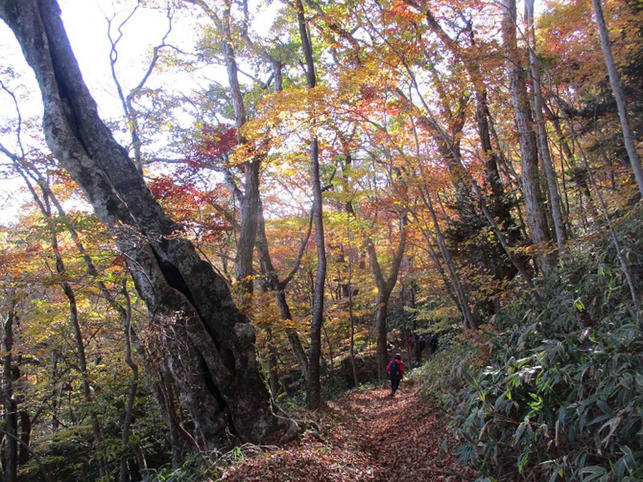 画像11: 11月14日に山旅会 八溝山 ツアーに行ってきました!