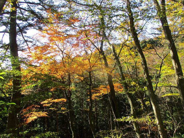 画像9: 11月14日に山旅会 八溝山 ツアーに行ってきました!