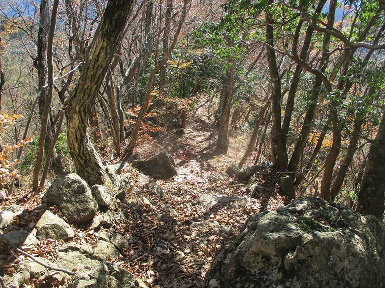 画像6: 11月の山旅会 都民の森から槙寄山 ツアーの下見に行ってきました!