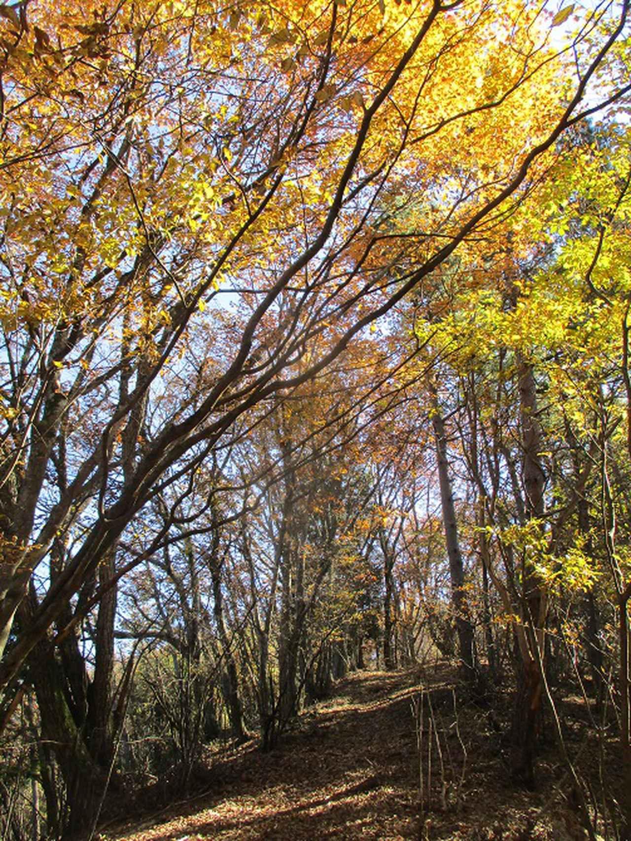画像7: 11月の山旅会 都民の森から槙寄山 ツアーの下見に行ってきました!